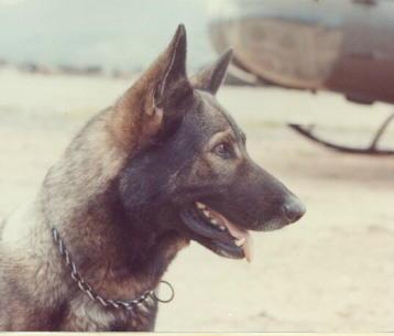 ScoutdogTheGrunt'sBestFriend